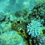 Коралловый пилинг